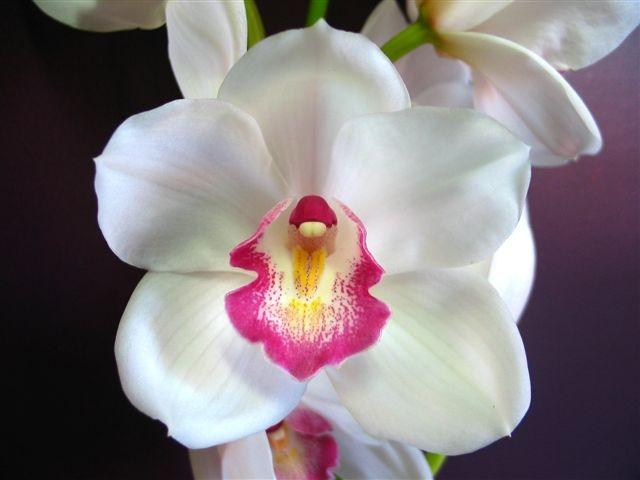 Perla Farms orchids